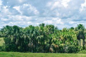 Cananguchales. Uno de los paisajes naturales de la región.